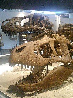 恐竜博2009_d0009833_2283444.jpg