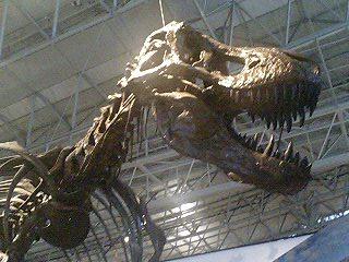 恐竜博2009_d0009833_2285217.jpg