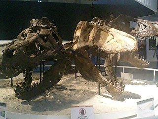 恐竜博2009_d0009833_228866.jpg