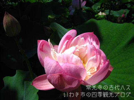 f0105342_12171610.jpg