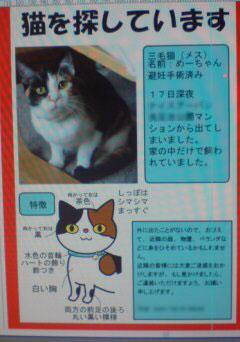 迷子猫、めーちゃん帰還_a0064067_0303251.jpg