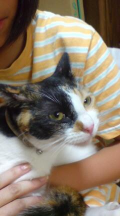 迷子猫、めーちゃん帰還_a0064067_2142177.jpg