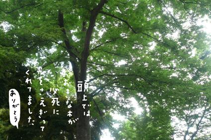 f0170072_2234998.jpg