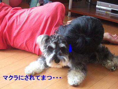 b0143879_1331037.jpg