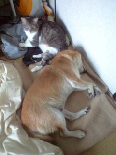 シルフィにくっついて寝るレイン_b0112380_12192521.jpg