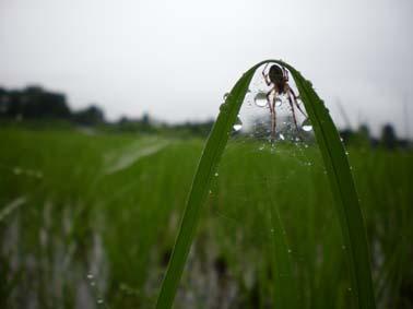雨ばかり降る_b0126182_611957.jpg