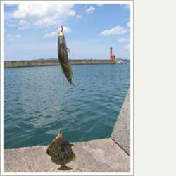 博多帰省2009夏 ~釣り編~_d0143592_1123394.jpg