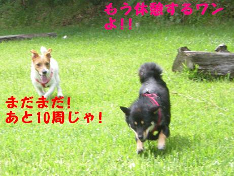 c0188294_15441647.jpg
