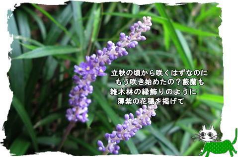 f0137096_23591566.jpg