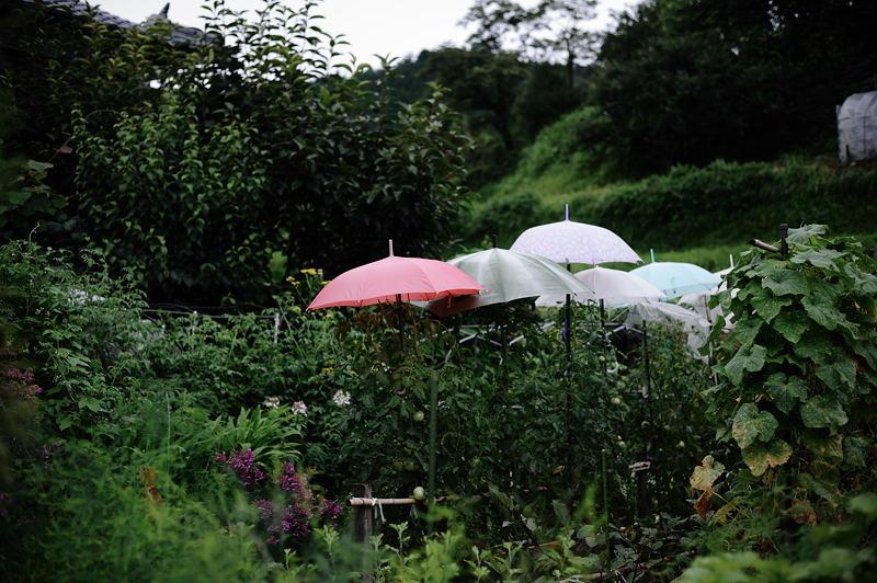 雨上がりの山里_f0032011_19324984.jpg