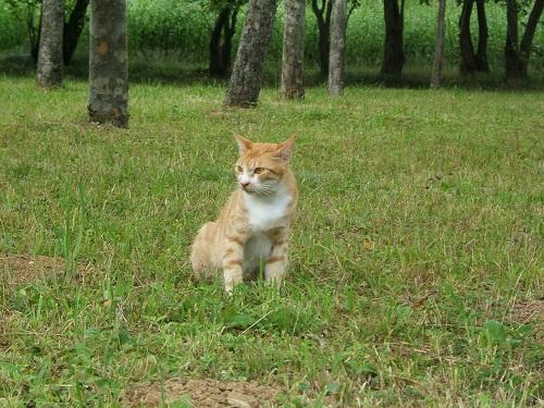 水元公園の猫1_e0089232_2022548.jpg