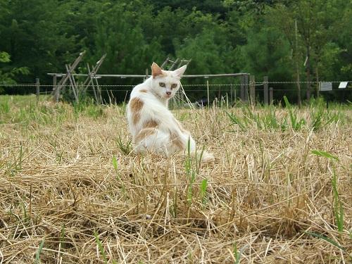 水元公園の猫1_e0089232_202325.jpg