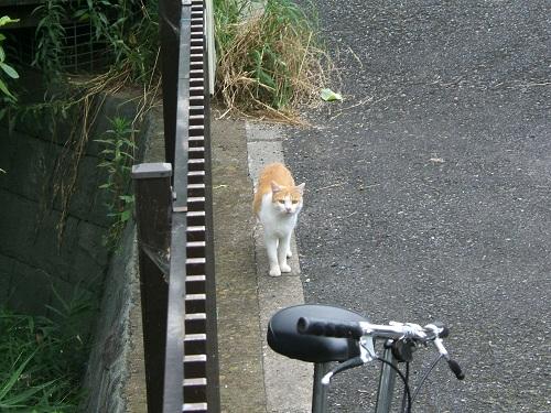 水元公園の猫1_e0089232_2061163.jpg