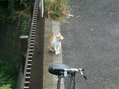 水元公園の猫1_e0089232_2061726.jpg