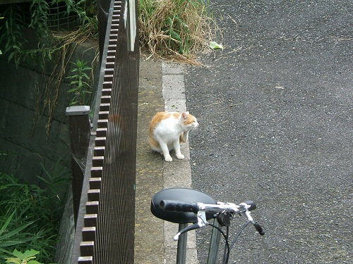 水元公園の猫1_e0089232_2062528.jpg