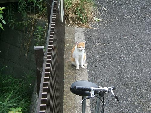 水元公園の猫1_e0089232_2063266.jpg