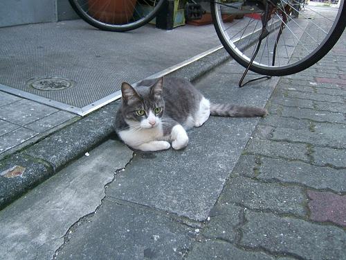 日曜に出会った猫_e0089232_2084741.jpg