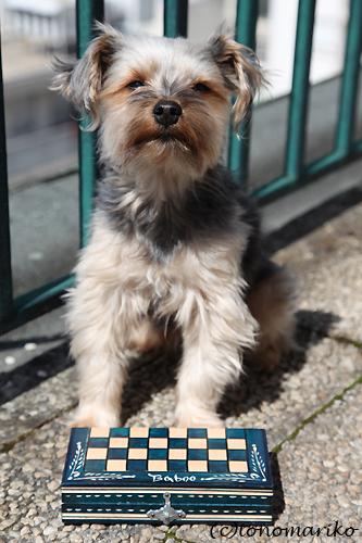チェスのちょっと苦い失敗談 ハンガリー旅行7_c0024345_20233298.jpg
