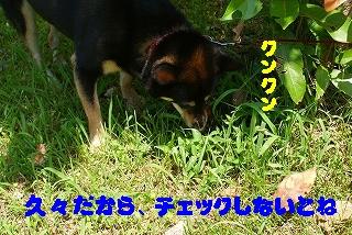 d0101070_173551.jpg