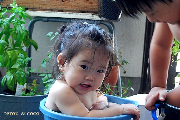 tarou&cocoの夏の思ひ出_a0105872_15215446.jpg