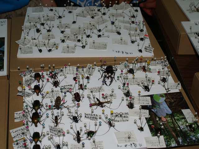 今森光彦さんの「全国こども昆虫キャンプ」_b0135573_1537716.jpg