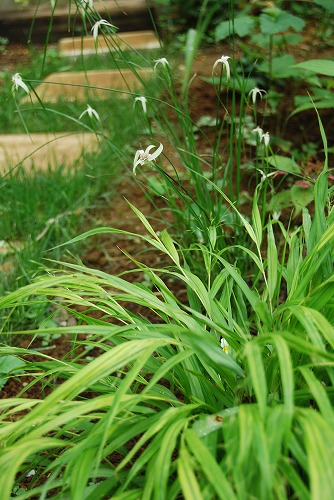 夏の涼し気な葉もの…_c0124100_19344777.jpg