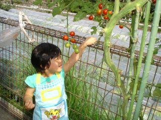 ミニトマト豊作! マコにこにこ!_e0166301_23265960.jpg