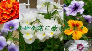b0166327_20495497.jpg