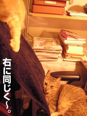b0080632_17366.jpg