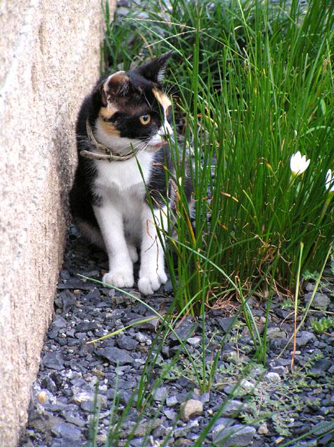 げげっ! 2009/07/27-mon_f0031535_21245582.jpg