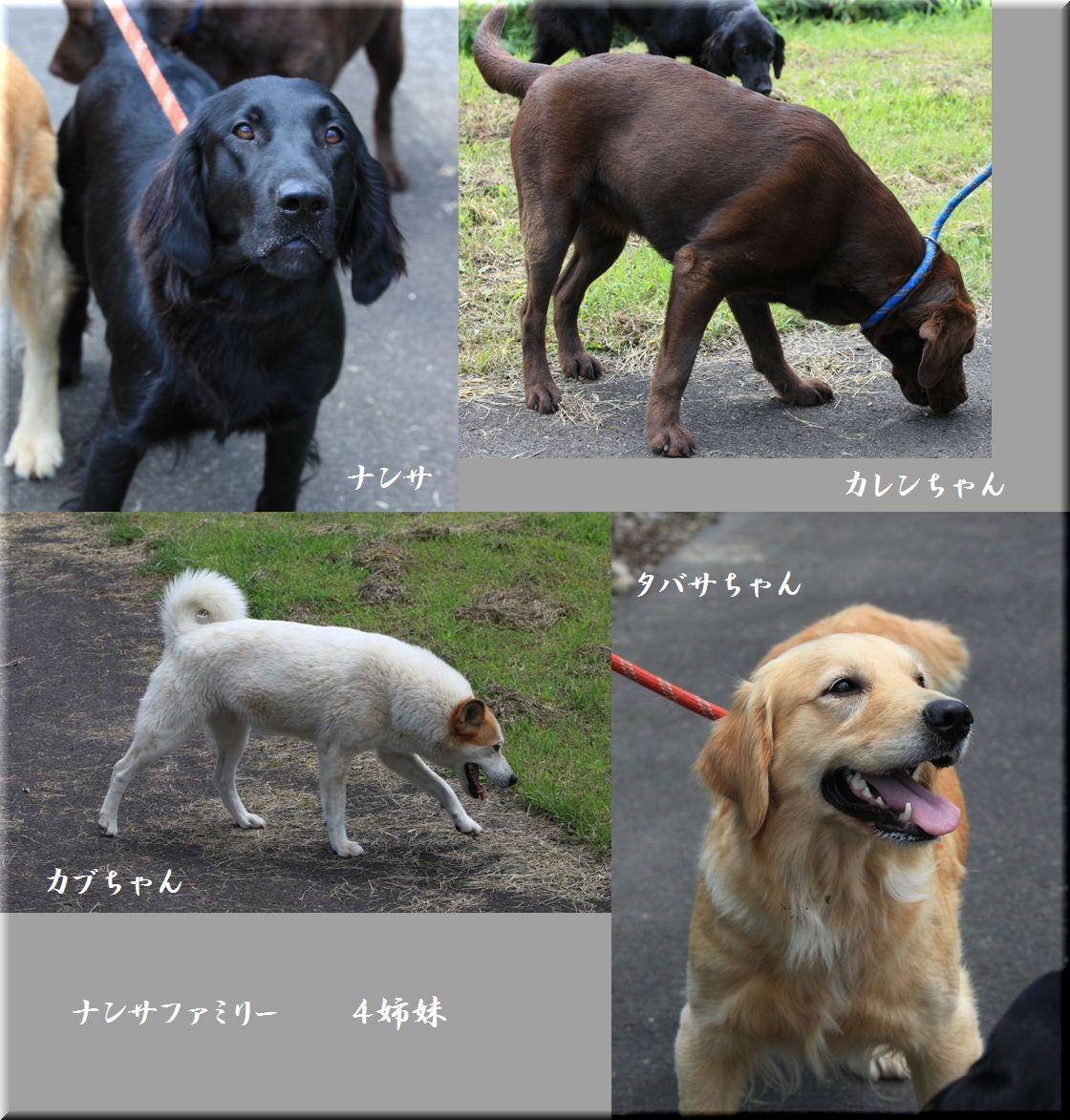 2009 山形・仙台旅行  其の六 ナンサに会えたぁの巻_c0134862_0254817.jpg