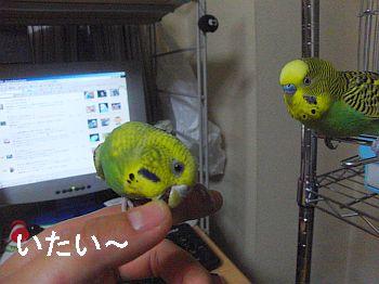 f0196665_047593.jpg