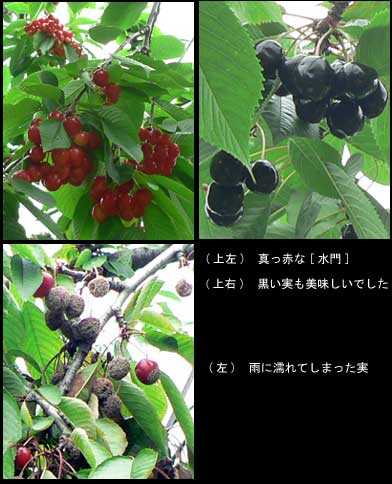 f0083977_23332873.jpg