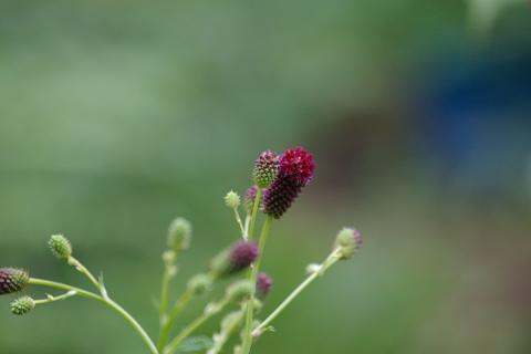 我が家の植物図鑑。_f0163491_2042238.jpg