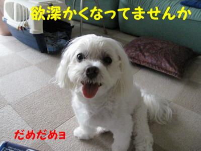 f0145192_15322075.jpg