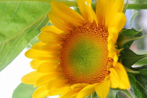 夏の光をいっぱい浴びて…_c0124100_1993025.jpg