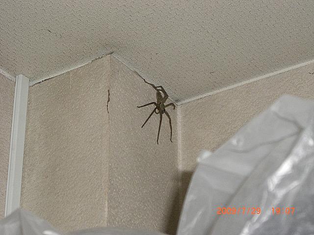 A big spider_e0150006_20455367.jpg