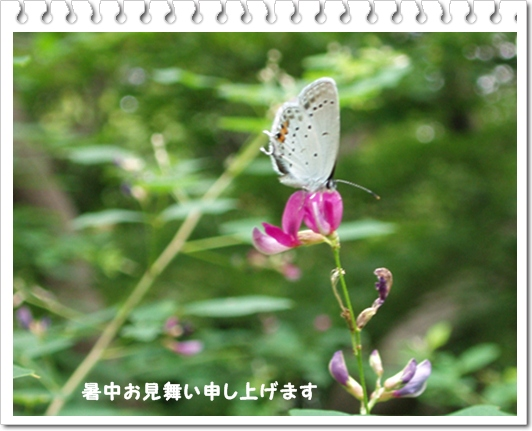 c0051107_22534262.jpg