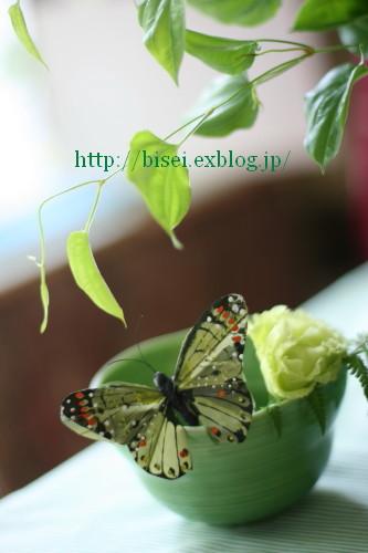 b0132016_18532847.jpg