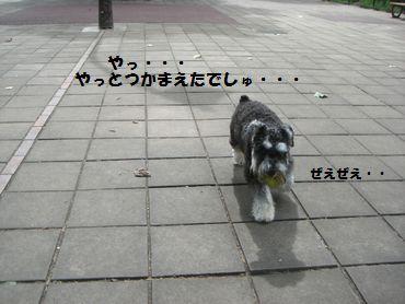 f0197317_859326.jpg