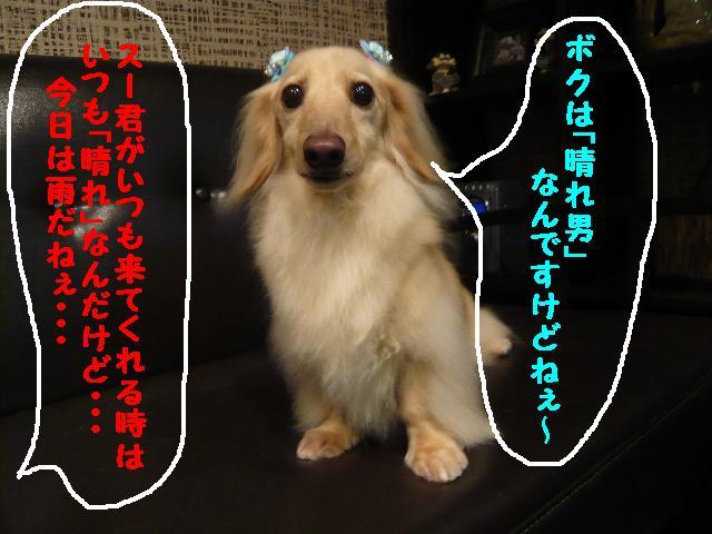 b0130018_17174383.jpg
