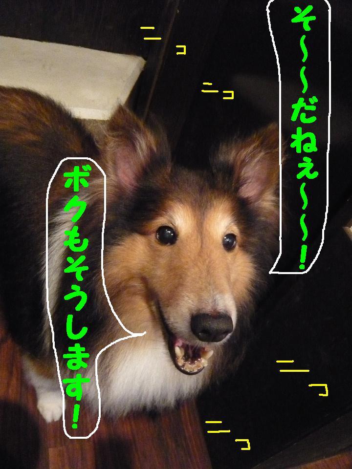 b0130018_17204672.jpg