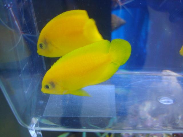海水魚・サンゴ・水草・熱帯魚・日本産淡水魚・金魚_f0189122_18344165.jpg