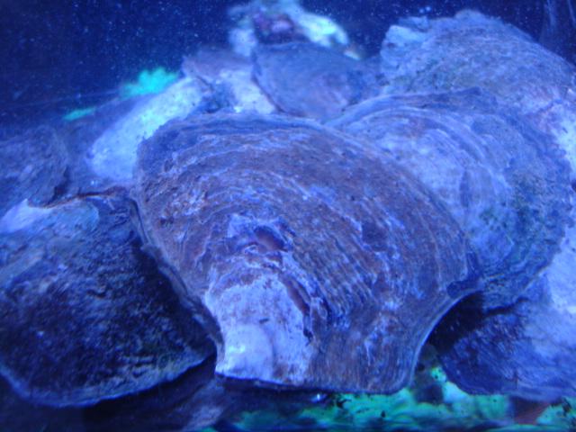 海水魚・サンゴ・水草・熱帯魚・日本産淡水魚・金魚_f0189122_1839581.jpg