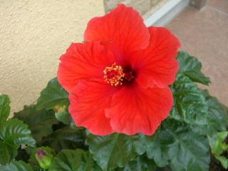 Il mio giardino_a0059035_003688.jpg