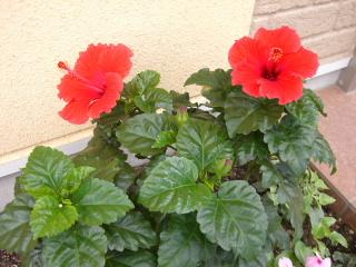 Il mio giardino_a0059035_012618.jpg