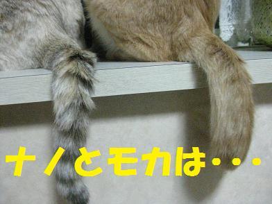 b0151748_1216797.jpg