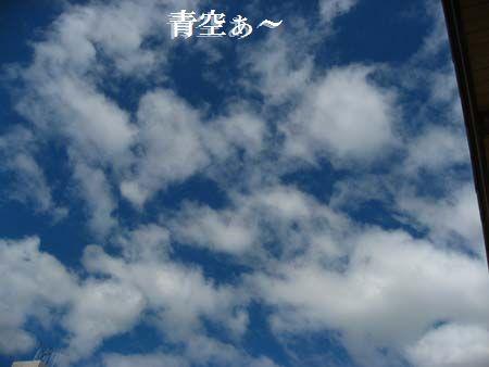 東洋蘭                          No.673_d0103457_2345680.jpg