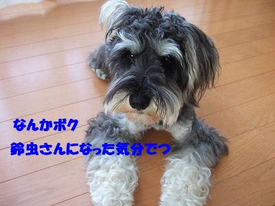 b0143879_1614218.jpg