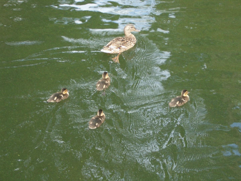 Kew Garden  パート2_a0137487_1954122.jpg